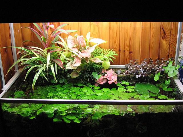 piante galleggianti | terrarium & aquarium - Piante Galleggianti Acquario Chiuso